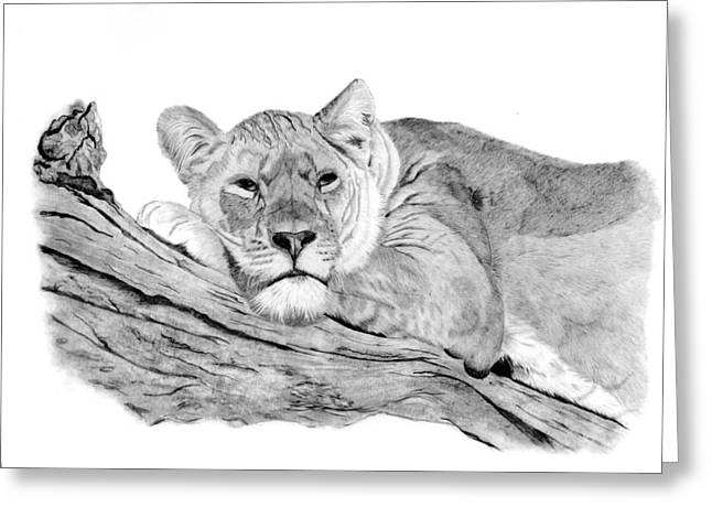 Lioness Drawings Greeting Cards - Lioness Resting Greeting Card by Sarah Dowson