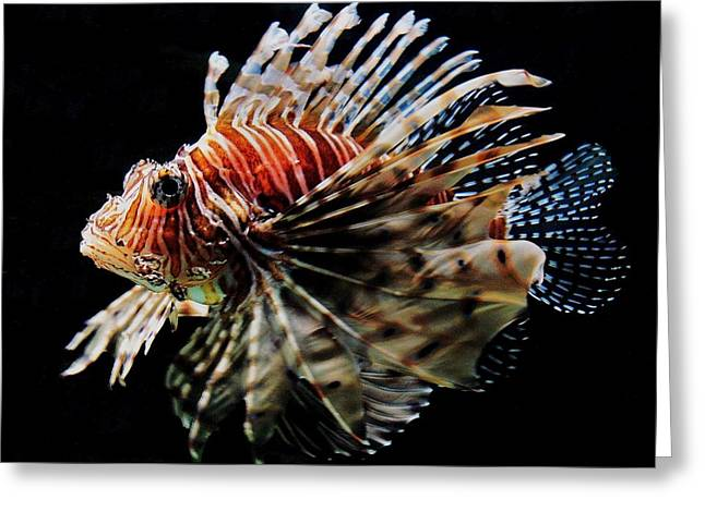 Recently Sold -  - Sea Lions Greeting Cards - Lionfish Greeting Card by Benjamin Yeager