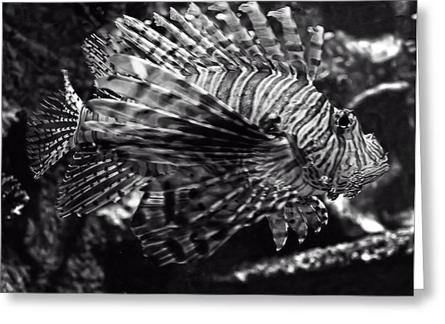 Lionfish Greeting Cards - Lionfish Greeting Card by Chris Flees