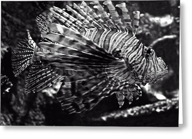 Lionfish Greeting Cards - Lionfish Greeting Card by Chris Flees
