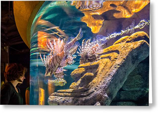 Aquatic Greeting Cards - Lionfish Display Greeting Card by Steve Harrington