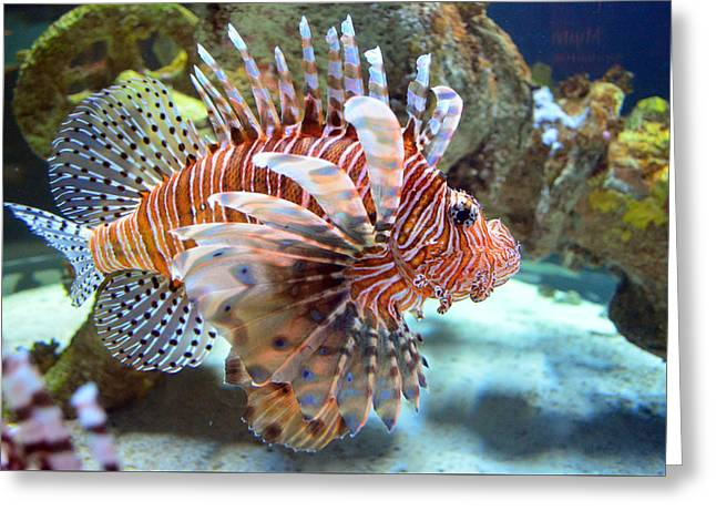 Aquarium Fish Greeting Cards - Lionfish Greeting Card by Sandi OReilly