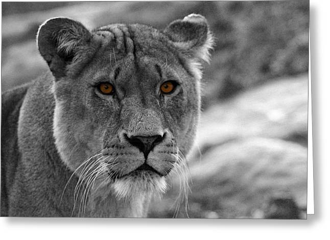 Bigcat Greeting Cards - Lions Eyes Greeting Card by Martin Newman