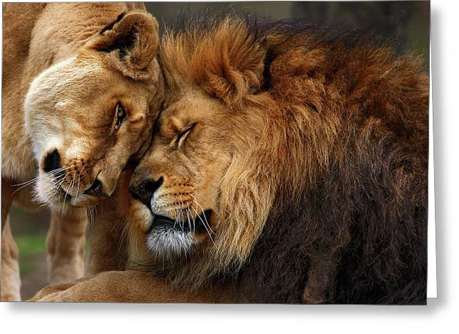 Animal Photographs Greeting Cards - Lions in Love Greeting Card by Emmanuel Panagiotakis