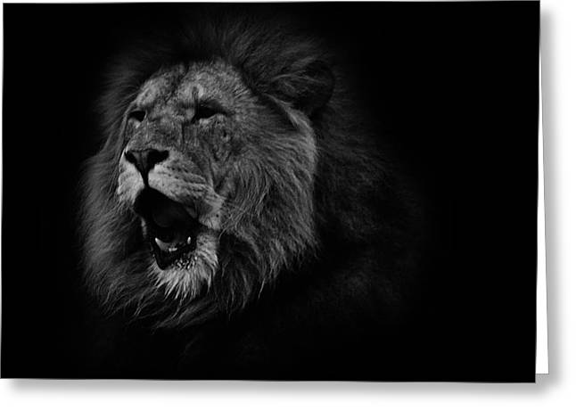 Bigcat Greeting Cards - Lions Roar Greeting Card by Martin Newman