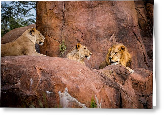 Rocks Photographs Greeting Cards - Lions Greeting Card by Zina Stromberg