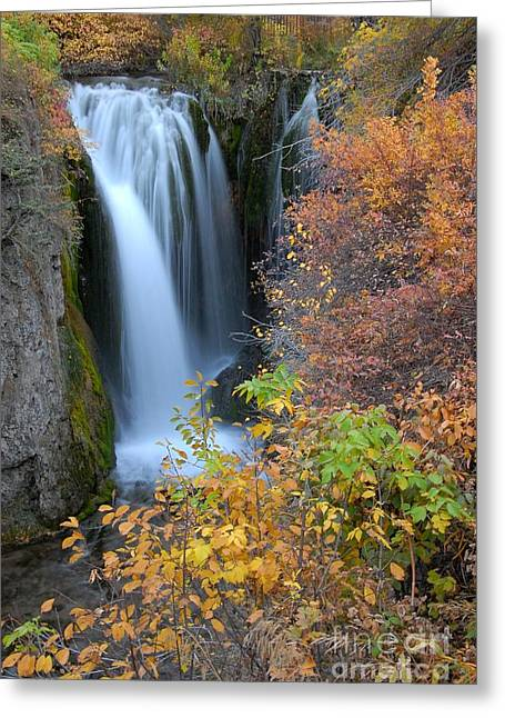 Black Rock Yellow Leaves Water Greeting Cards - Liquid Beauty Greeting Card by Anthony Wilkening