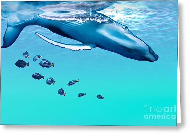 Sea Creature Pictures Greeting Cards - Liquid Gems Greeting Card by Corey Ford