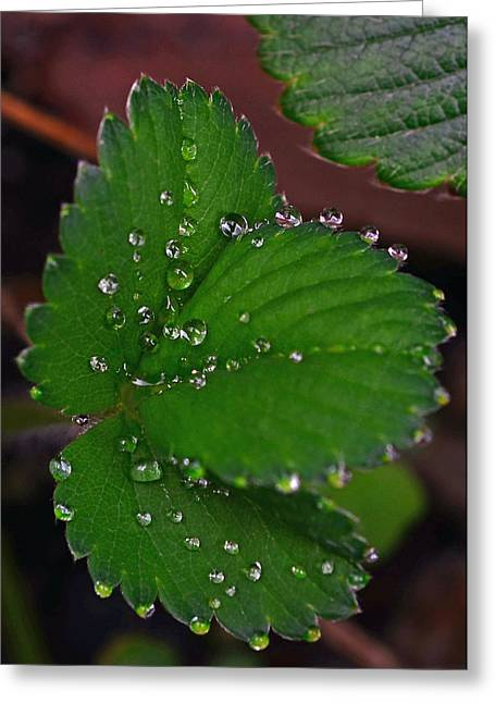 Dewy Greeting Cards - Liquid Pearls on Strawberry Leaves Greeting Card by Lisa  Phillips