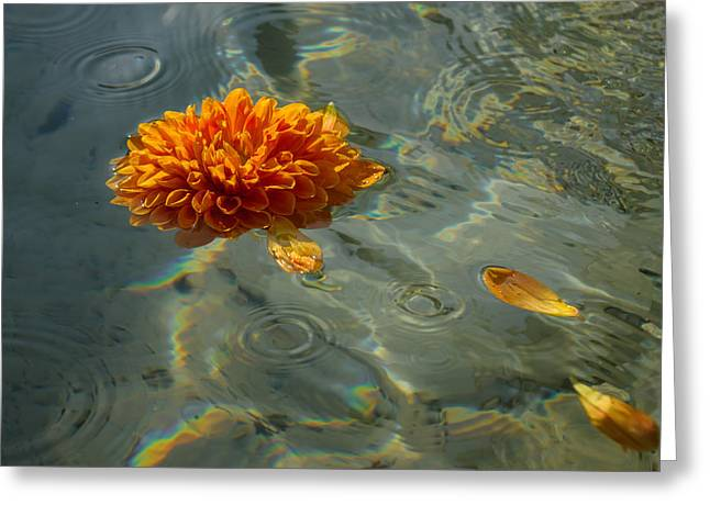 Coloured Greeting Cards - Liquid Rainbows - Chrysanthemum Blossom Floating in the Sunlight Greeting Card by Georgia Mizuleva