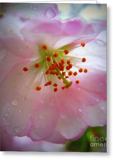 Petals With Droplets Greeting Cards - Liquid Sunshine Greeting Card by Patti Whitten