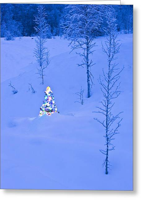 Snowy Night Night Greeting Cards - Lit Christmas Tree At Twilight Greeting Card by Kevin Smith