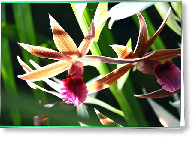 Occasion Greeting Cards - Lit up Orchid Greeting Card by Sonali Gangane