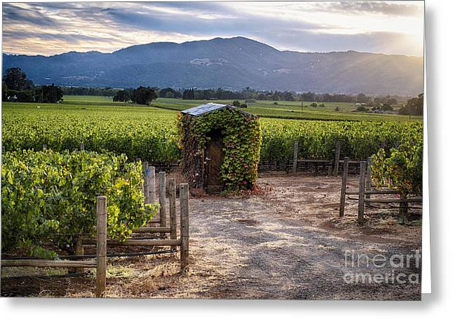 Bunch Of Grapes Photographs Greeting Cards - Little Shed in the Vineyard Greeting Card by George Oze