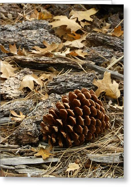 Pine Cones Greeting Cards - Litter Greeting Card by Robert Ball