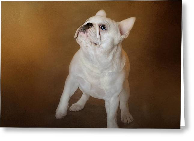 Artistic Photography Greeting Cards - Little Beggar - White French Bulldog Greeting Card by Jai Johnson