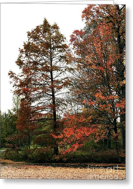 Photos Of Autumn Greeting Cards - Little Bit of Red Greeting Card by John Rizzuto