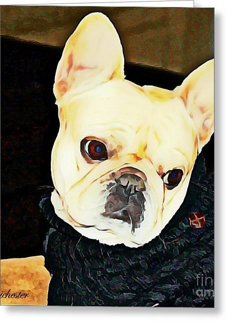 Bully Greeting Cards - Little Black Sweater Greeting Card by Barbara Chichester