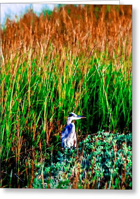 Sailboats Docked Greeting Cards - Little Blue bird at the beach  Greeting Card by Laurie Martin