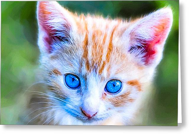 Kat Greeting Cards - Little Blue Eyes  - Orange Tabby Kitten Greeting Card by Mark Tisdale