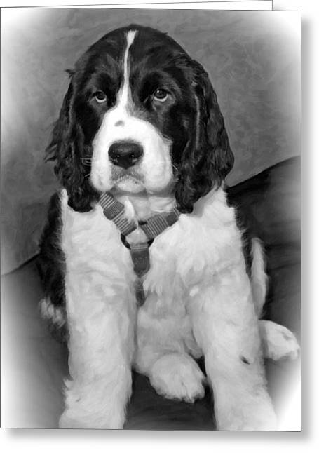 Spaniel Digital Art Greeting Cards - Little Boy Blue oil bw Greeting Card by Steve Harrington