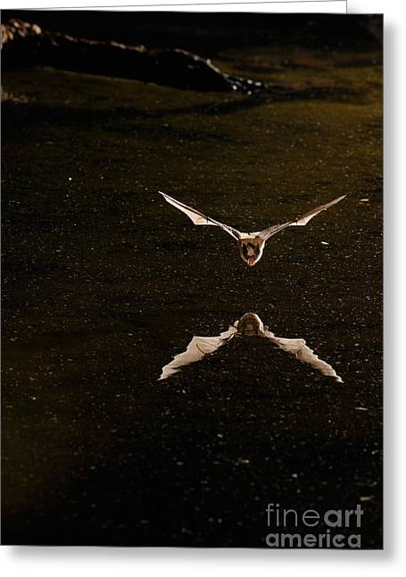 Bat Wings Greeting Cards - Little Brown Bat Greeting Card by Scott Linstead
