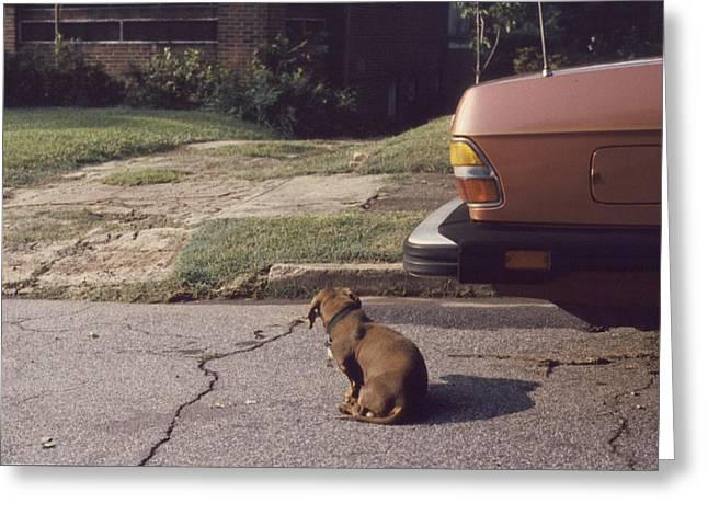 Little Brown Dog Greeting Card by John Hines