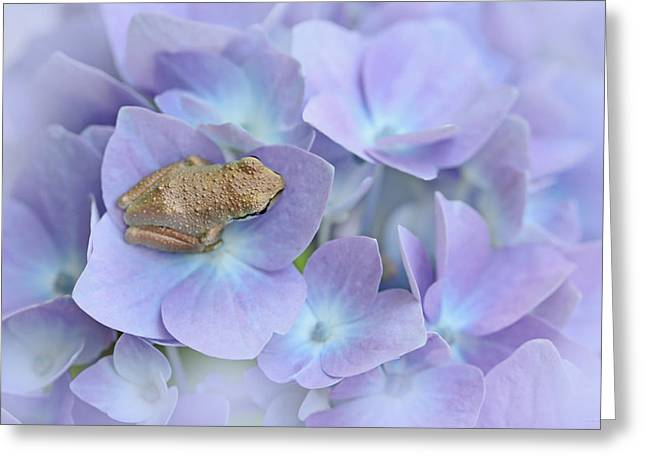 Brown Frog Greeting Cards - Little Brown Frog on Hydrangea Flower  Greeting Card by Jennie Marie Schell