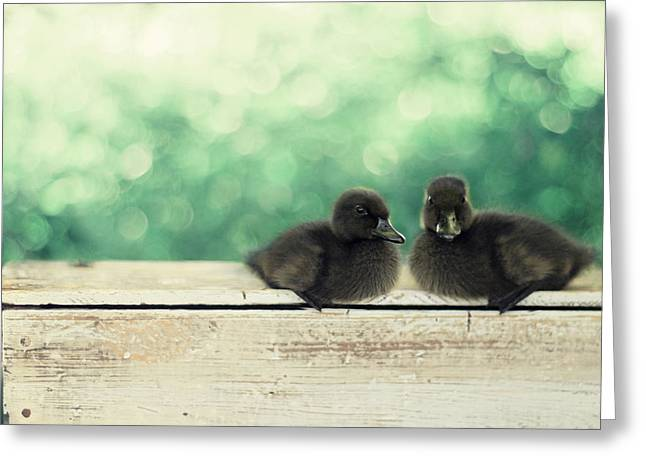 Ducklings Greeting Cards - Little Buddies Greeting Card by Amy Tyler