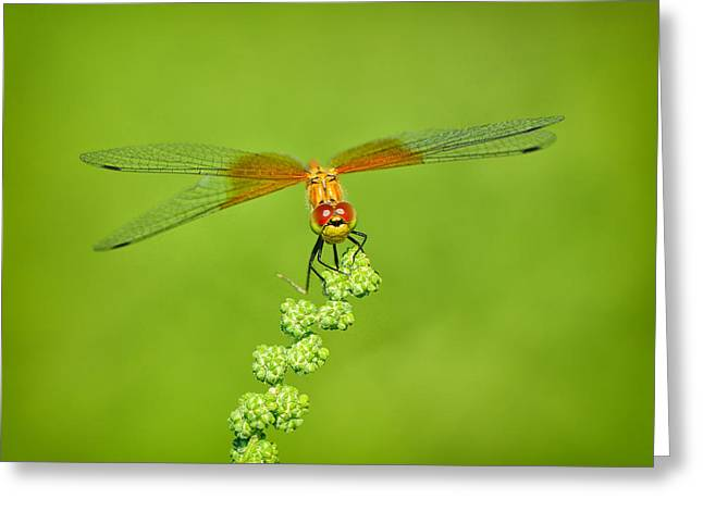 Photogaphy Greeting Cards - Little Bugger Greeting Card by Greg Norrell