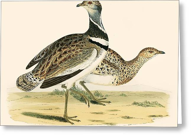 Hunting Bird Photographs Greeting Cards - Little Bustard Greeting Card by Beverley R. Morris