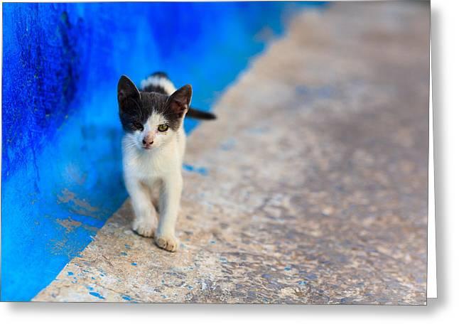 City Life Pastels Greeting Cards - Little cat Greeting Card by Desislava Panteva