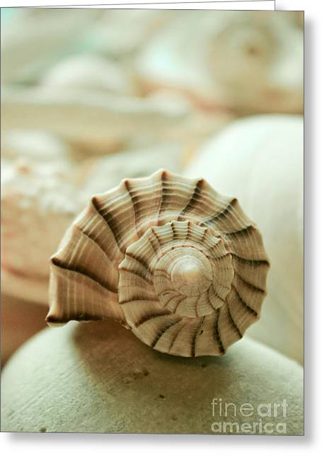 Ocean Art. Beach Decor Greeting Cards - Little Conch Shell Greeting Card by Colleen Kammerer