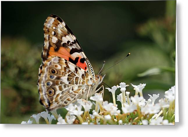 Wildlife Pictures Greeting Cards - Little Creature Greeting Card by Juergen Roth
