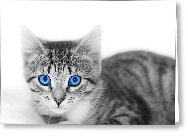 Gray Hair Greeting Cards - LIttle cute kitten. Space for your text Greeting Card by Michal Bednarek