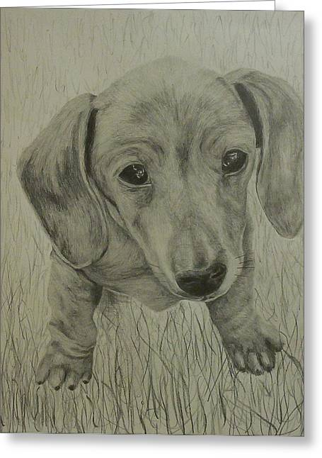 Little Dachshund Greeting Card by Phillip Compton