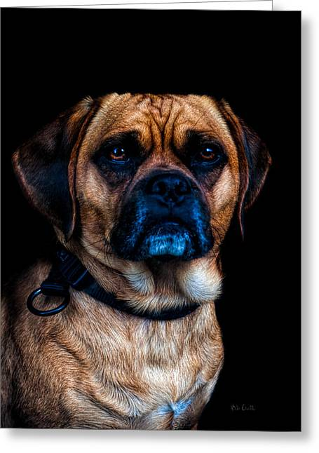 Doggie Photographs Greeting Cards - Little Dog Big Heart Greeting Card by Bob Orsillo