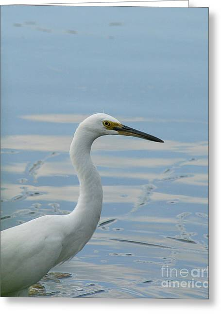 Natures Photos Greeting Cards - Little Egret Portrait  Greeting Card by Neal  Eslinger
