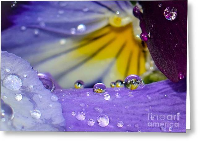 Flower Blossom Greeting Cards - Little Faces Greeting Card by Amy Porter