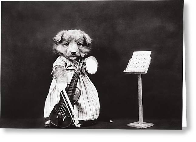 Old Dogs Greeting Cards - Little fiddler Greeting Card by Aged Pixel