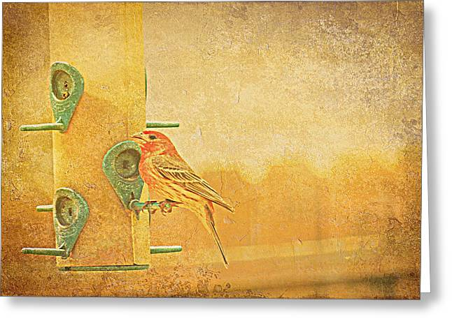Kay Novy Greeting Cards - Little Finch On A Perch Greeting Card by Kay Novy