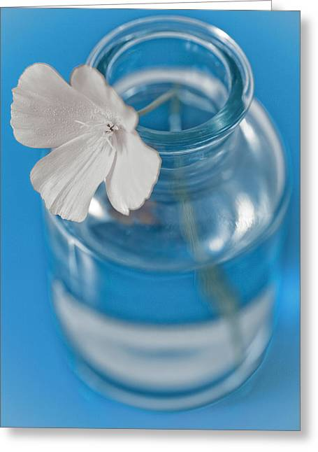 Little Flower In A Vase Greeting Card by Frank Tschakert
