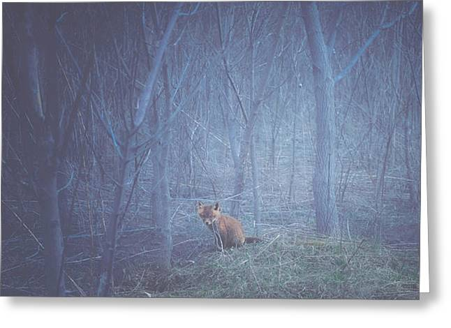 Red Fox Pup Greeting Cards - Little Fox in the Woods Greeting Card by Carrie Ann Grippo-Pike