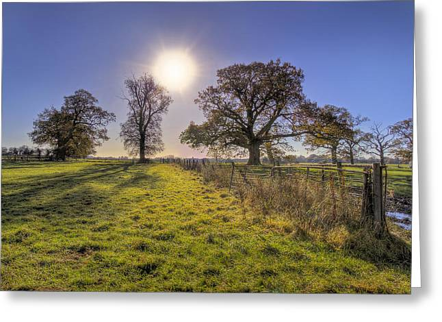 Oils Greeting Cards - Little Gaddesden Morning Greeting Card by David Dwight