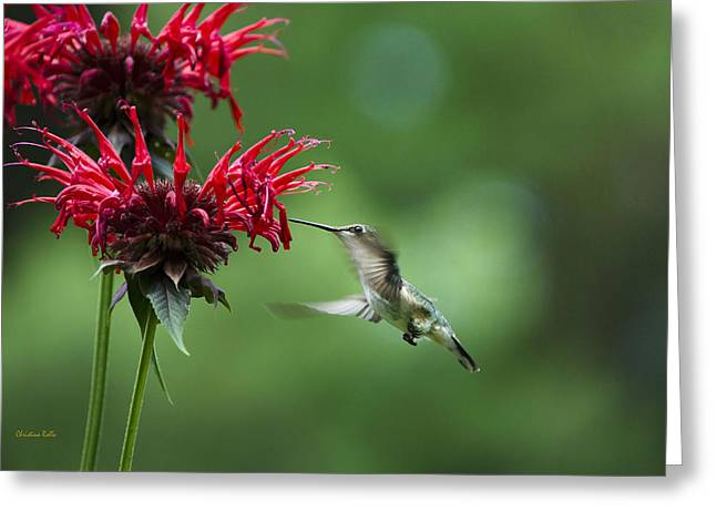 Hovering Greeting Cards - Little Garden Jewel Greeting Card by Christina Rollo