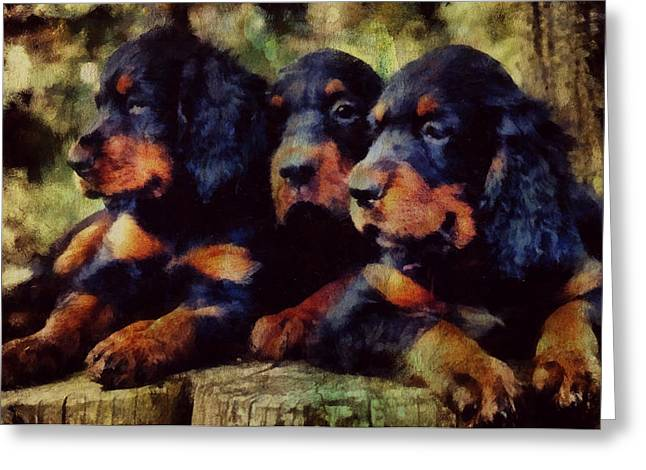 Gordon Setter Puppy Greeting Cards - Little Gordons In A Huddle  Greeting Card by Janice MacLellan