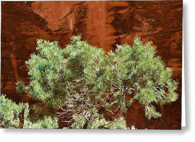 Arches National Park Pine Trees Greeting Cards - Little green tree Greeting Card by Joshua Jensen