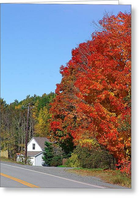 Annapolis Valley Greeting Cards - Little House with a Big Tree Greeting Card by Janet Ashworth
