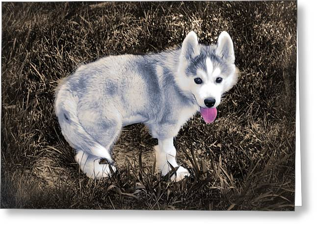 Puppies Digital Art Greeting Cards - Little Huskie Pup Greeting Card by Bill Cannon