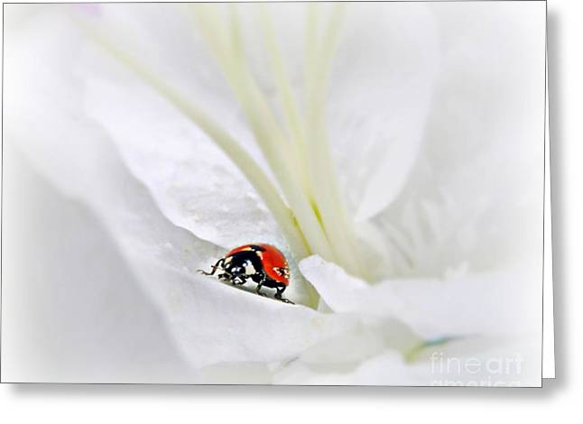 Little Ladybug Greeting Card by Morag Bates
